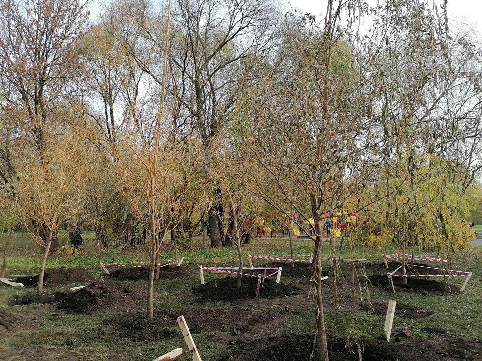наше дерево, акция, Антон Кульбачевский, озеленение,деревья