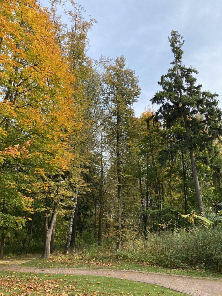 Невероятной красоты деревья в парке