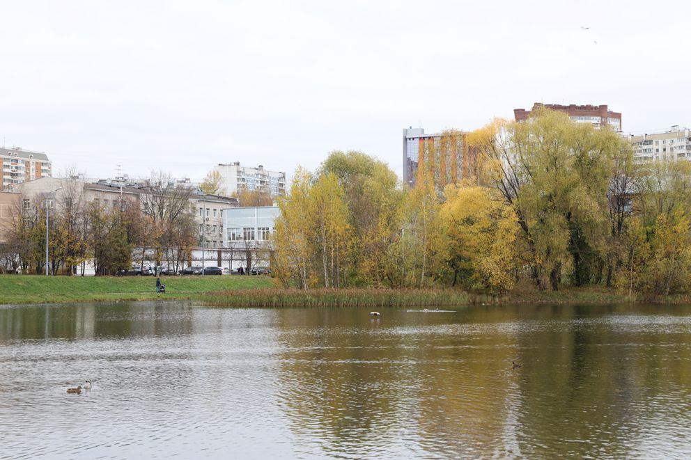 пруд, осень