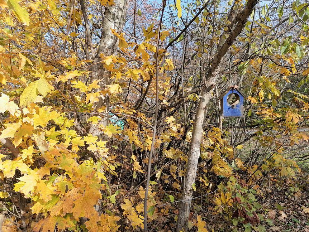 осень, долина реки сетунь,парки Москвы, природный заказник «Долина реки Сетунь»