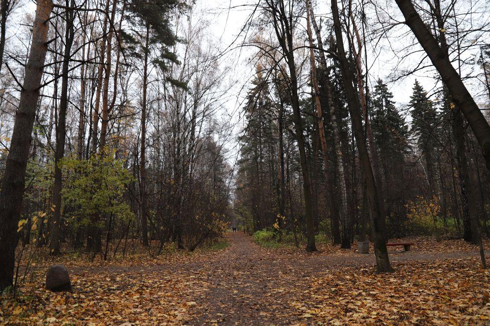 Природные тропы смешанного леса