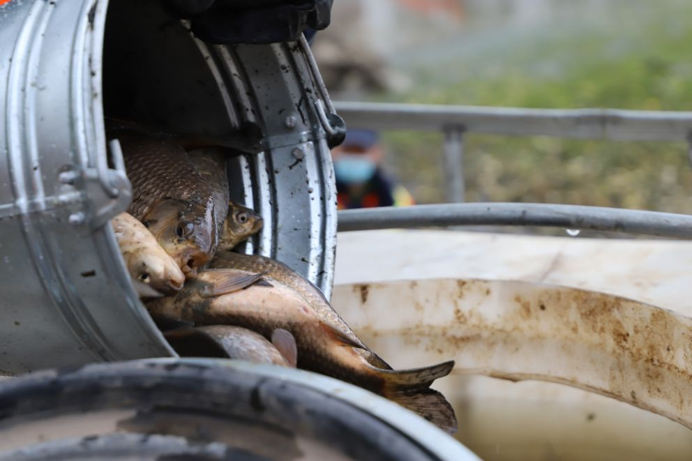 Рыб временно помещают в контейнер для транспортировки