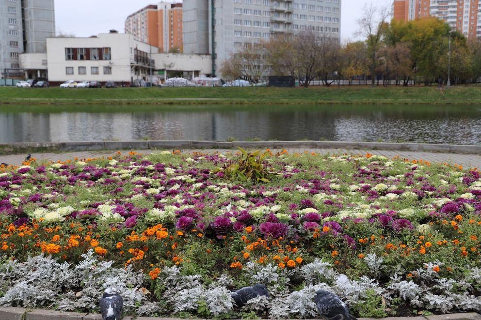 В цветочных зарослях прячутся голуби