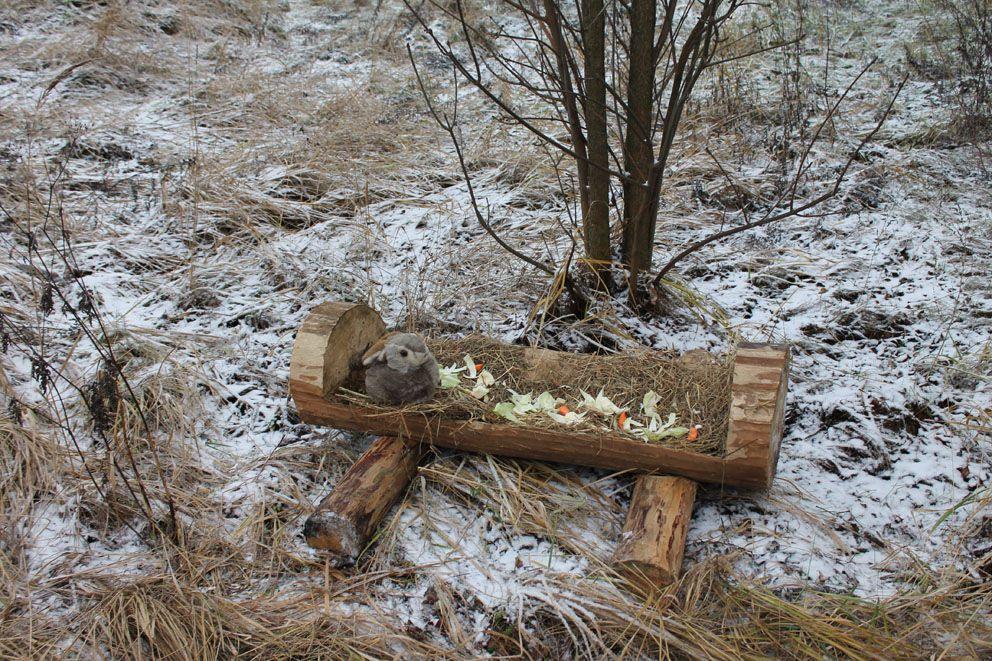 зайцы, зима в Москве, корм
