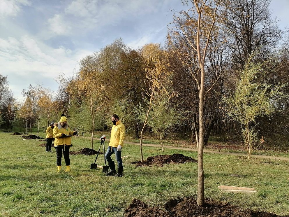 наше дерево, проект, экология Москвы