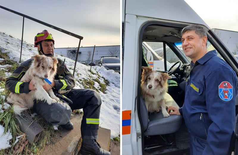 собака, спасатели