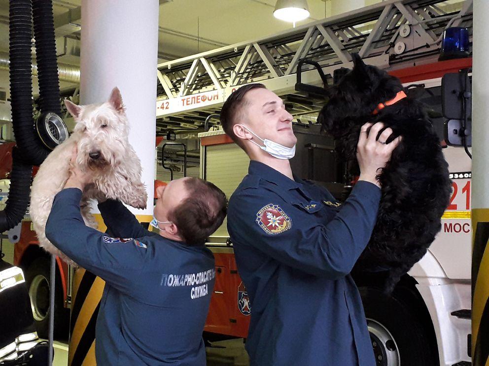 пожарные, собаки