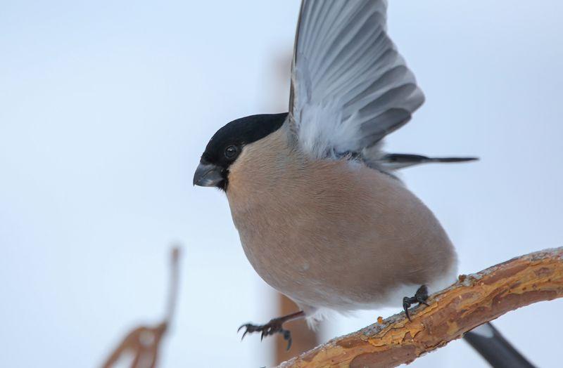 птица, мосприрода