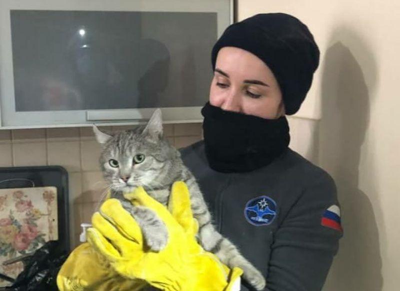 спасатели, коты