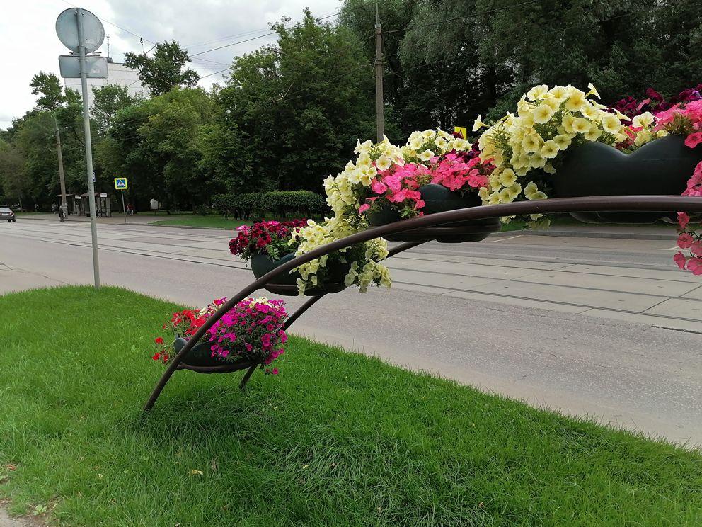 цветы, цветники, озеленение