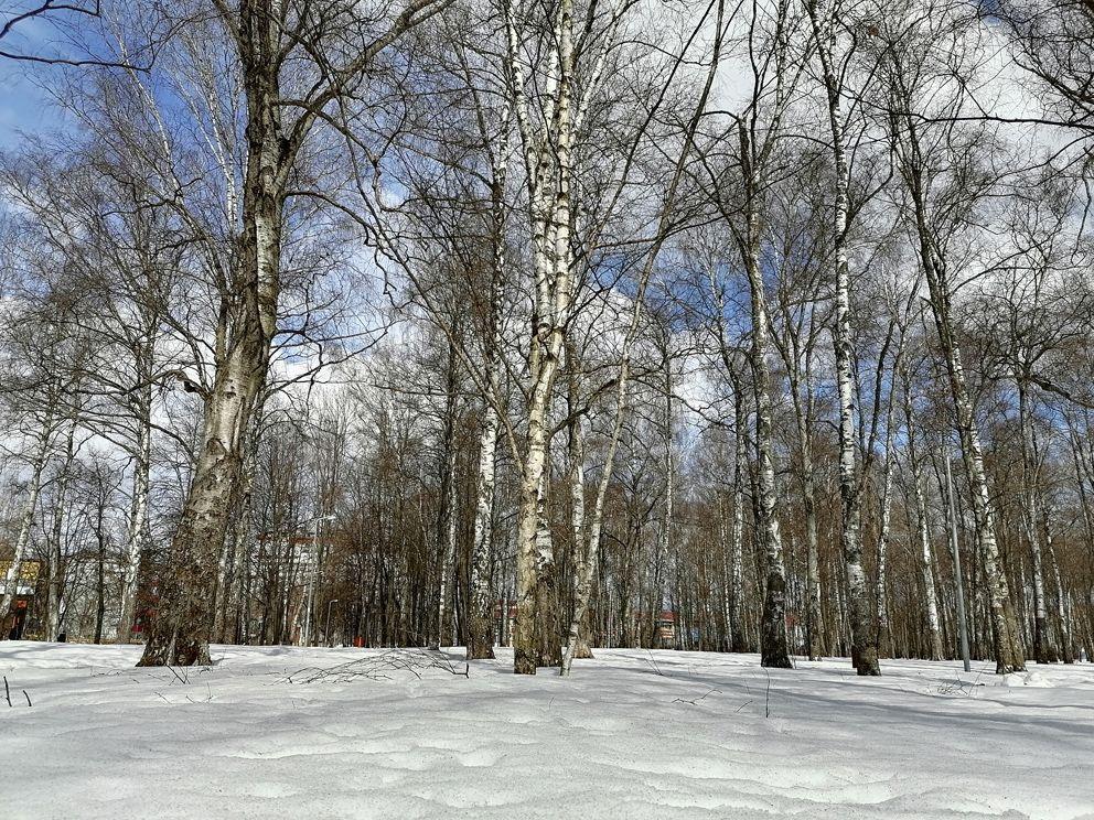 погода в Москве, снег, весна в Москве, лес
