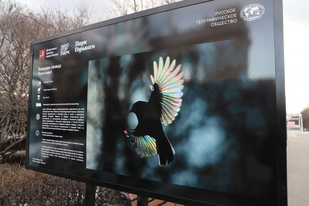 выставка, Парк Горького, птицы