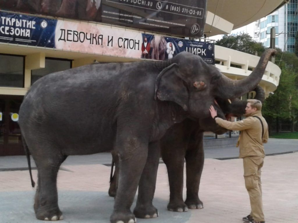 слон, цирк