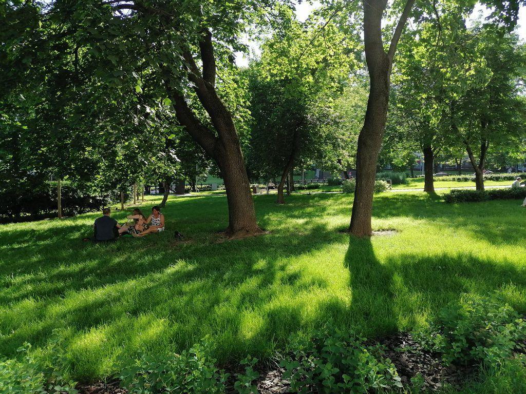 экология, лето, озеленение