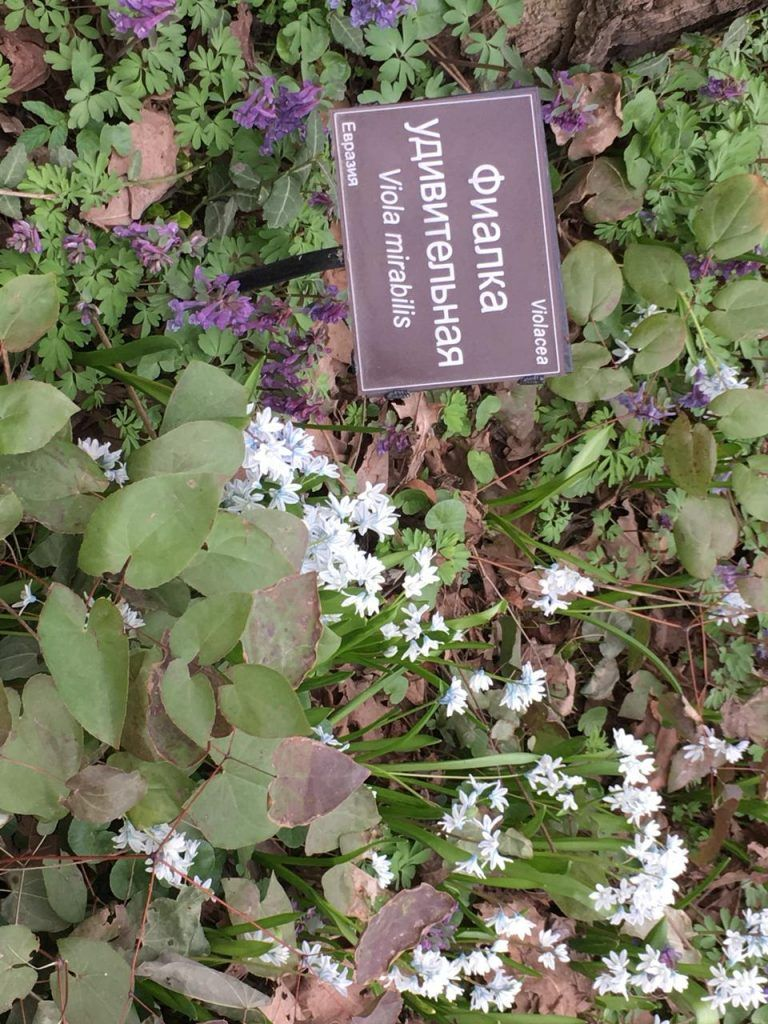 цветы, озеленение