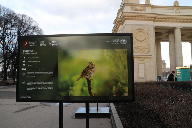варакушка, выставка, Парк Горького