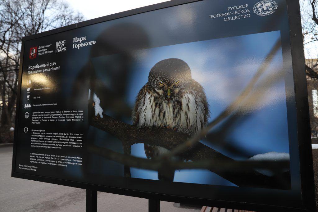 птицы, выставка, Парк Горького