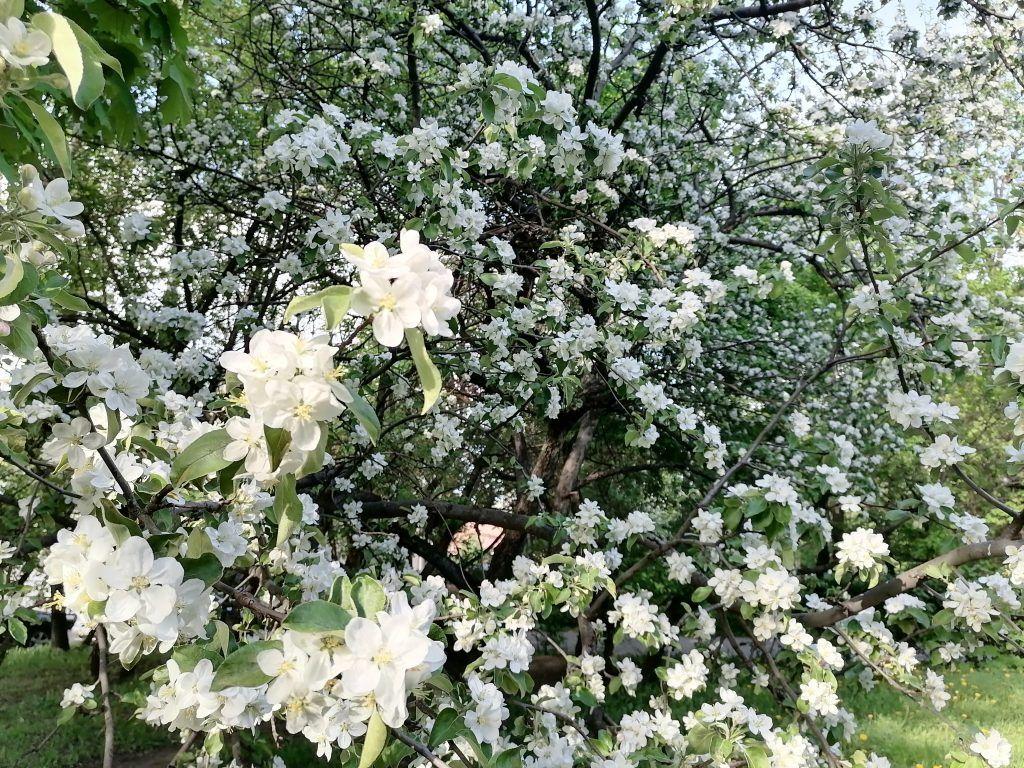 озеленение, весна, деревья, кустарники