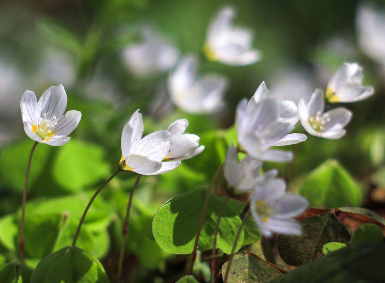 цветы, мосприрода