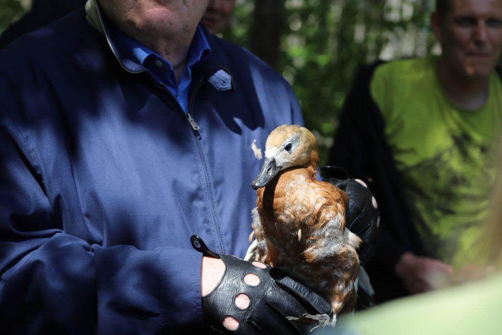 выпуск птиц, экология, департамент природопользования