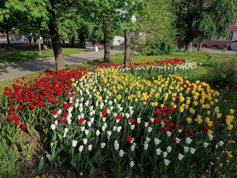 тюльпаны, весна, озеленение, цветники, благоустройство