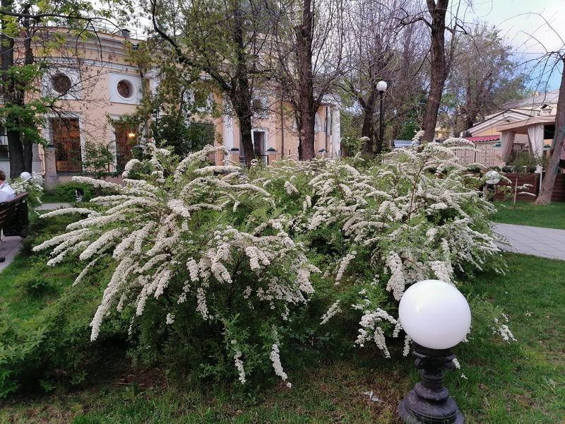 весна в Москве, озеленение,