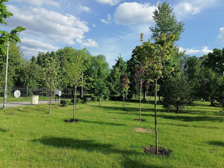 Мосэкомониторинг , деревья, экология Москвы