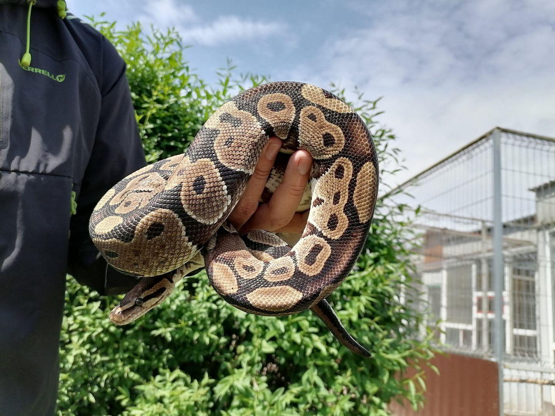 змея, рептилия