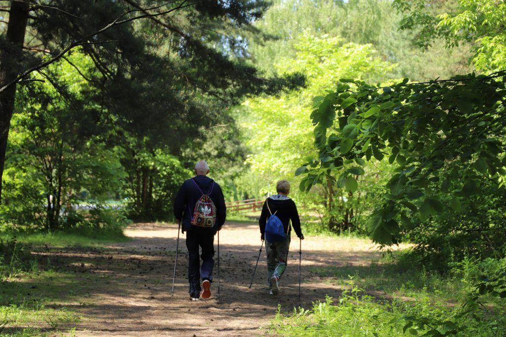 Пожилые люди занимаются в парке ветеран скандинавской ходьбой