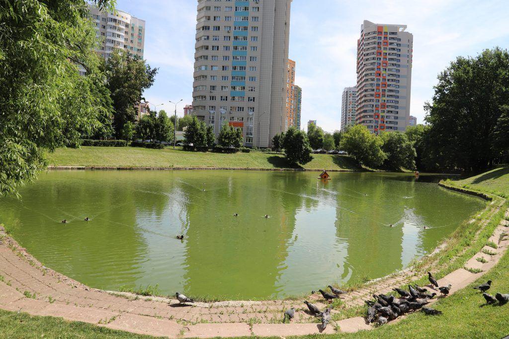 пруд, ГУП Мосводосток, экология, рыба