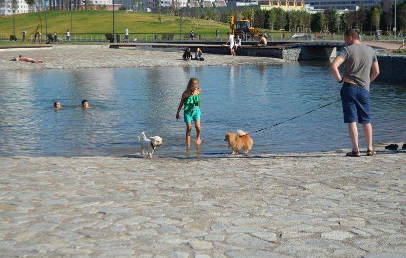 жара, водоем, собаки