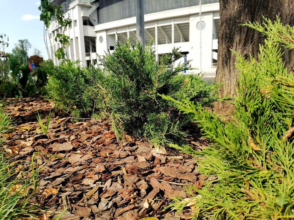 озеленение, благоустройство, метро, деревья