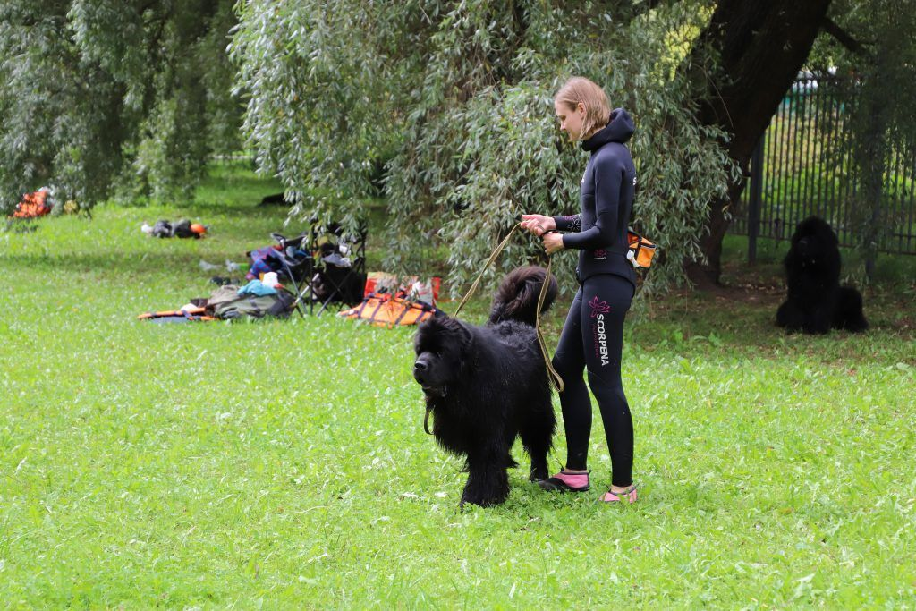спасатели, Четвероногие спасатели, ППС Строгино, собака, водоем