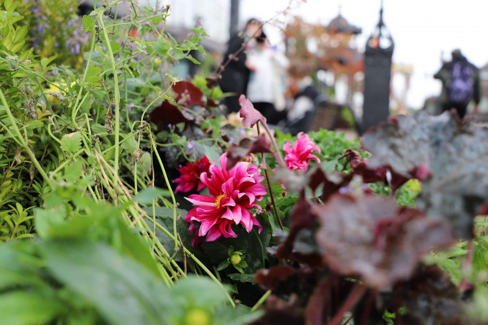 цветы, цветники