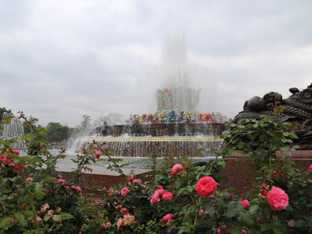 роза, ВДНХ, украшение Москвы, цветы