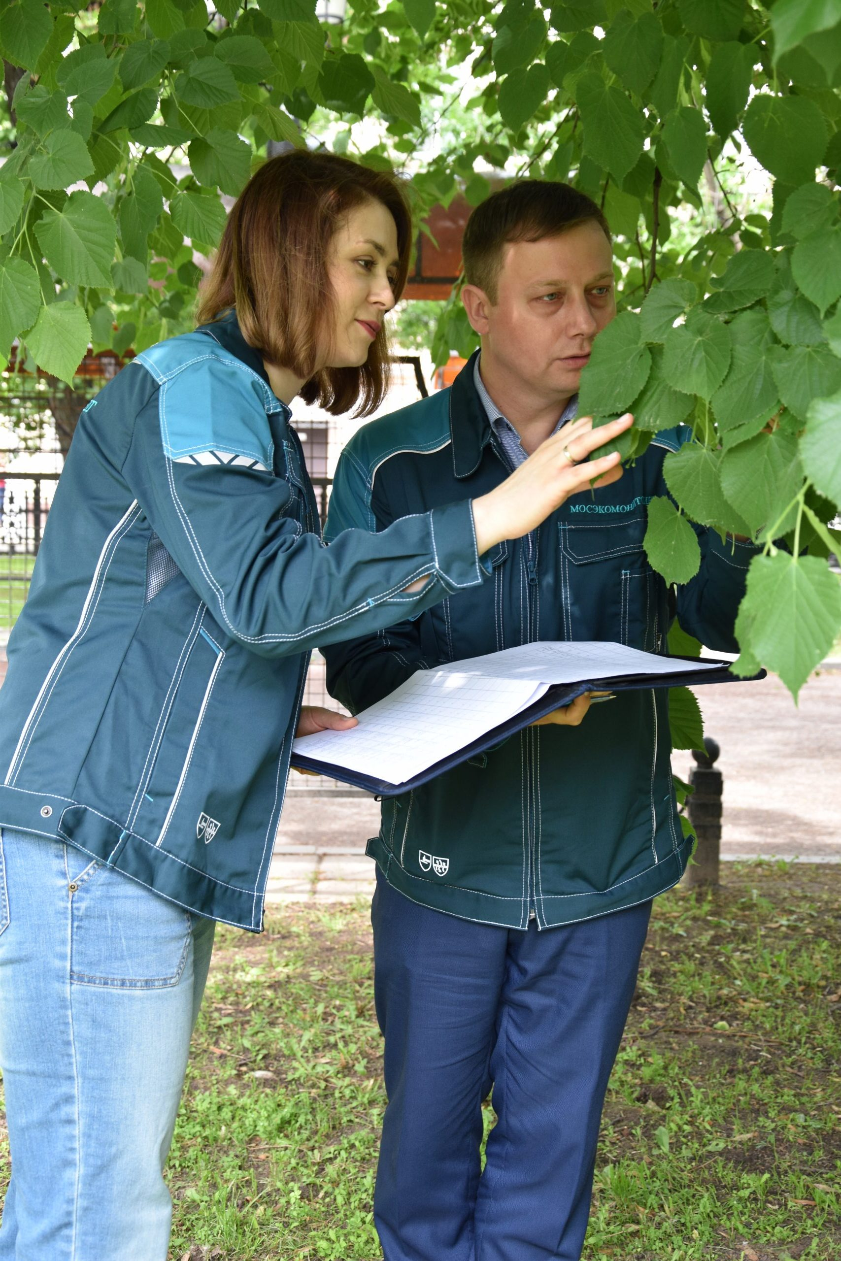Мониторинг зеленых насаждений, дендрологи, озеленение Москвы два+1