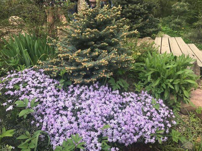 елка, цветы, аптекарский огород