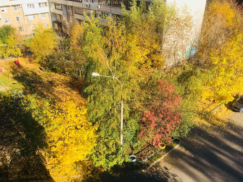 осень, деревья, двор, желтые листья