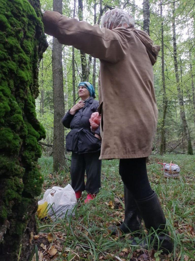 спасатели, лес, история спасения