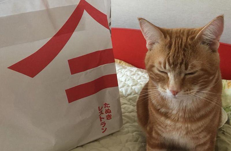 пакет, кот, экология